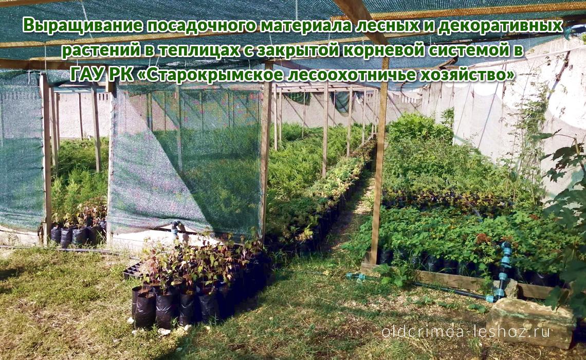 Выращивание посадочного материала лесных и декоративных растений в теплицах с закрытой корневой системой в ГАУ РК «Старокрымское лесоохотничье хозяйство»